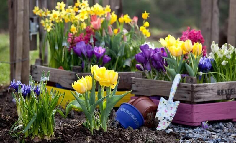 Картинки по запросу Убираем луковицы и отцветшие растения