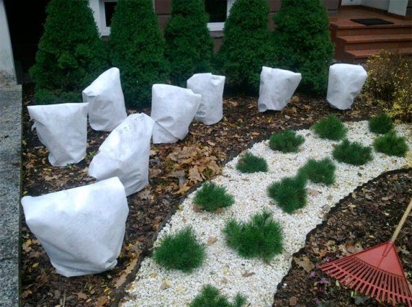 Способы защиты садовых растений от зимних морозов
