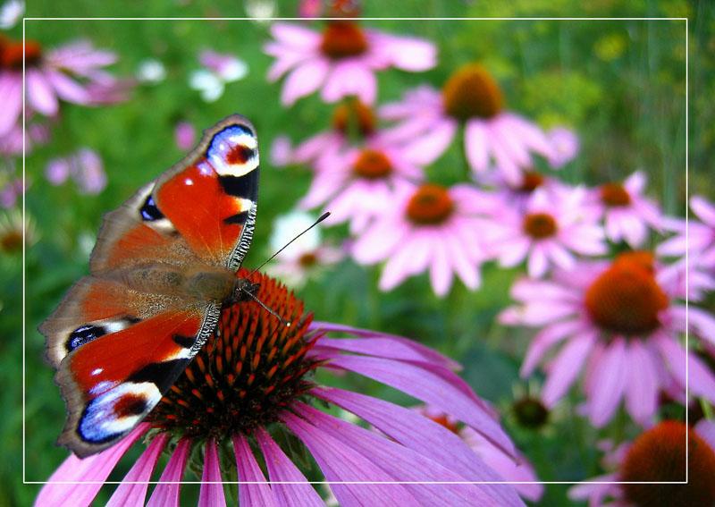 Картинки по запросу Дачные растения укрепят иммунитет