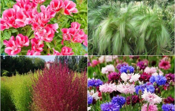 Картинки по запросу Какие цветы сеять под зиму и нужно ли это делать?