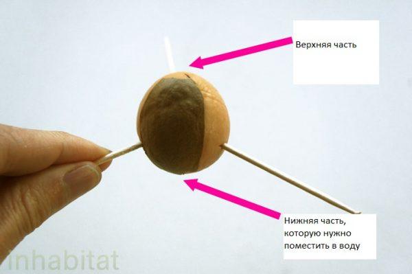 2_Avocado