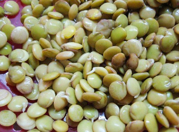 Картинки по запросу Как подготовить семена к весеннему посеву?
