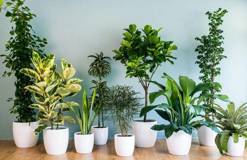 Картинки по запросу 9 домашних растений, требующих минимального ухода