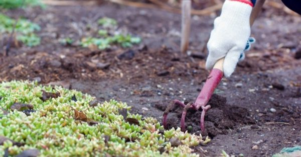 Как посадить культуры под зиму? Подготовка участка и посев