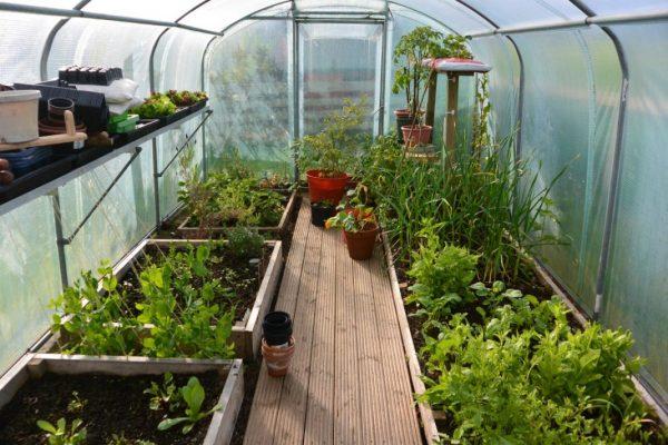 greenhouse-03
