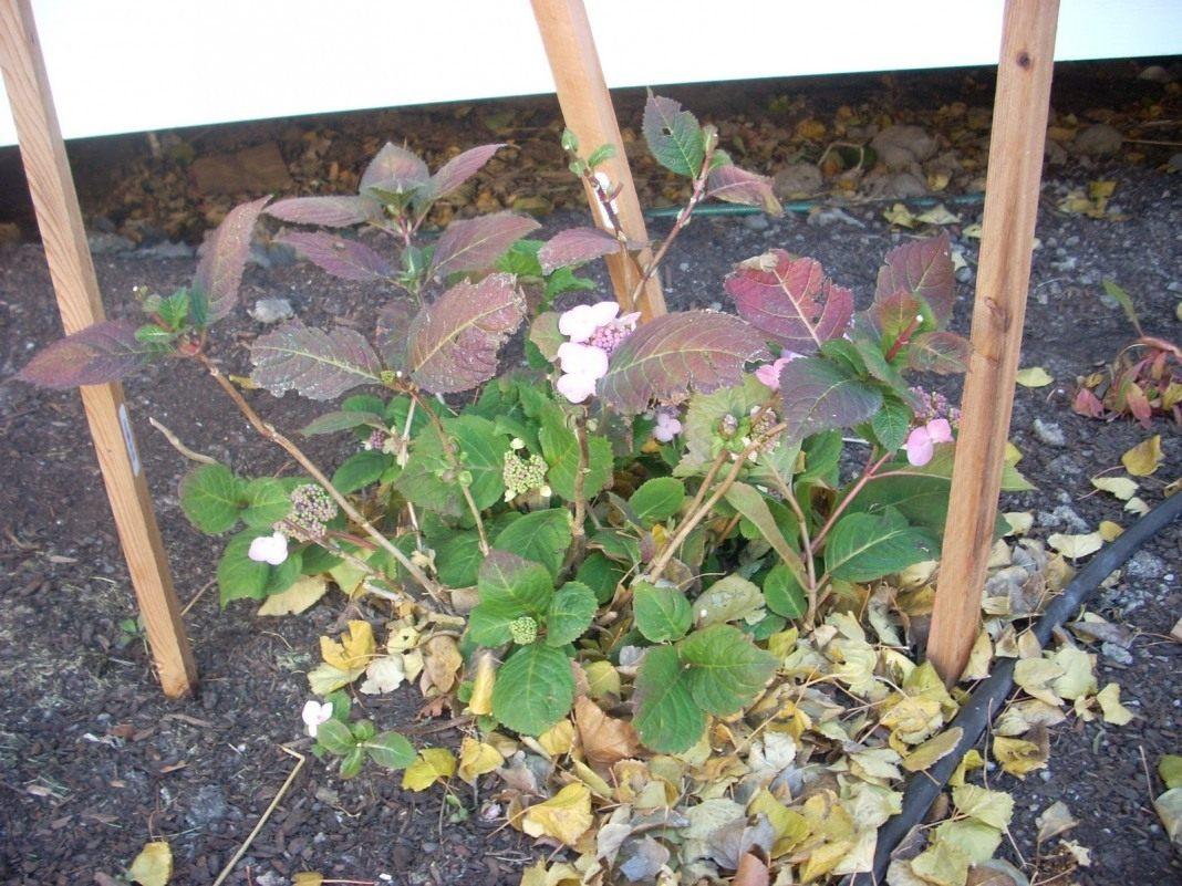 Картинки по запросу листья как укрытие