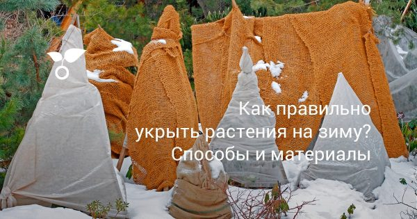 kak-pravilno-ukryit-rasteniya-na-zimu-sposobyi-i-materialyi