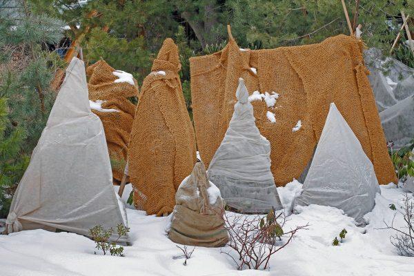 Картинки по запросу Укрывать на зиму растения
