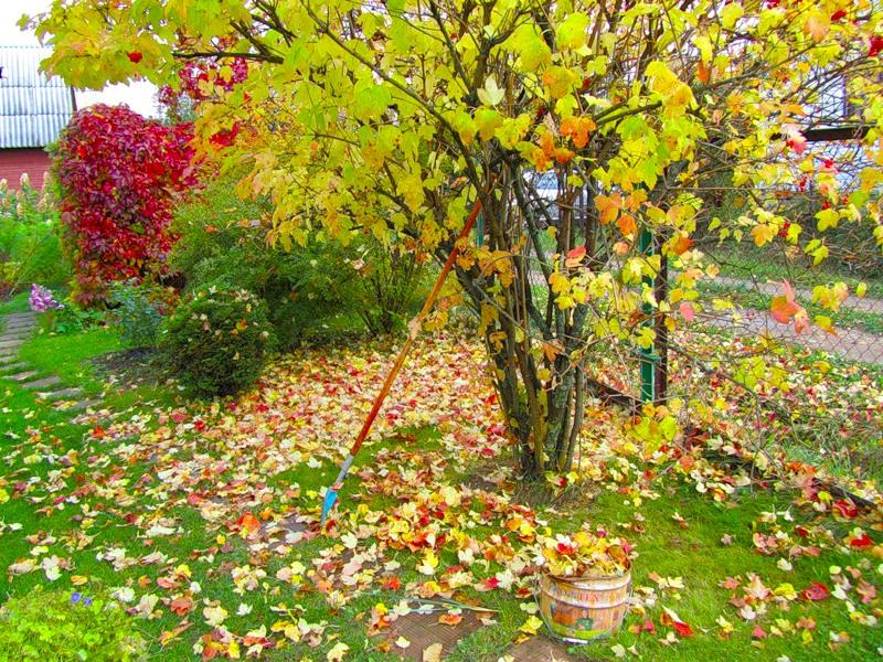 Картинки по запросу Листья на даче