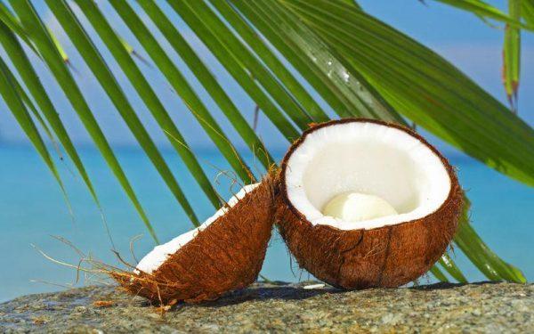 coconut07