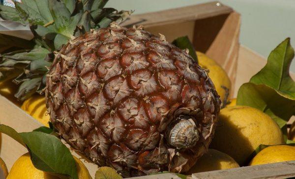 pineapple-2097777_960_720-e1492014819782