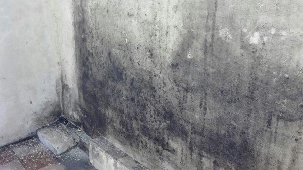 plesen-na-stene-600x337