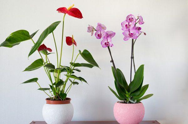 uhod-za-domashnimi-cvetami-letom-5-glavnih-layfhakov-1838-45238