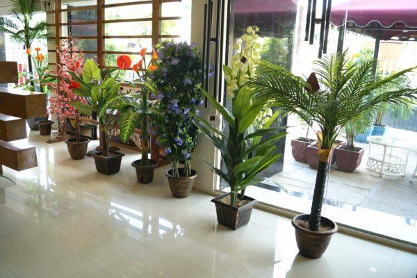 Lobby-plants-2