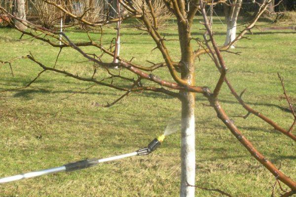 Весенние работы в саду. Чем опрыскивать сад весной от вредителей?