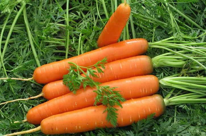 urozhaj-morkovi