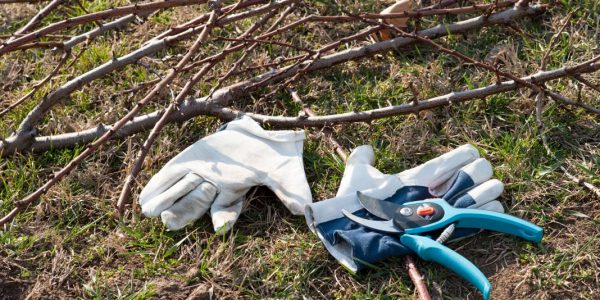 Картинки по запросу сломанные ветки в саду надо убрать