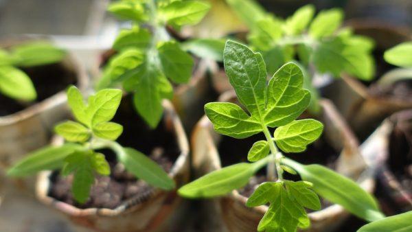 plant-999375 1280