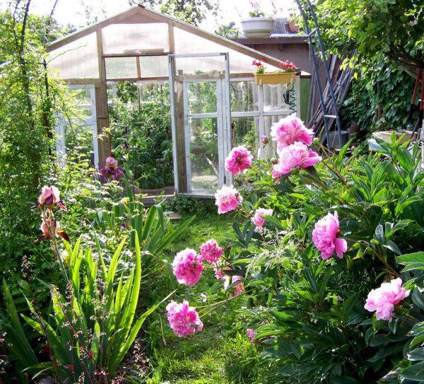 Полезные советы: Май на даче: работы в саду, на огороде и цветнике