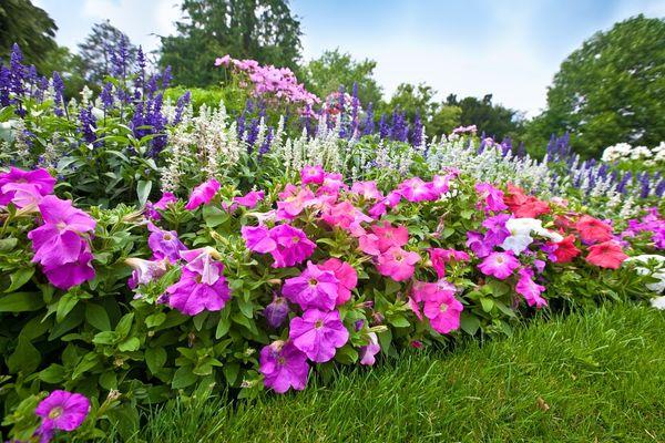 Создаем роскошную клумбу из многолетних растений. Как выбрать цветы для смешанной посадки в цветочной клумбе