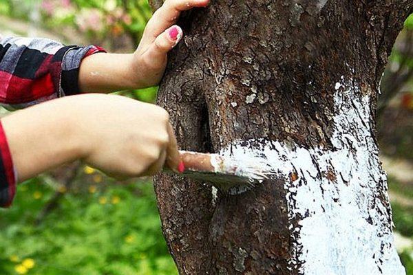 Картинки по запросу белить деревья я на даче