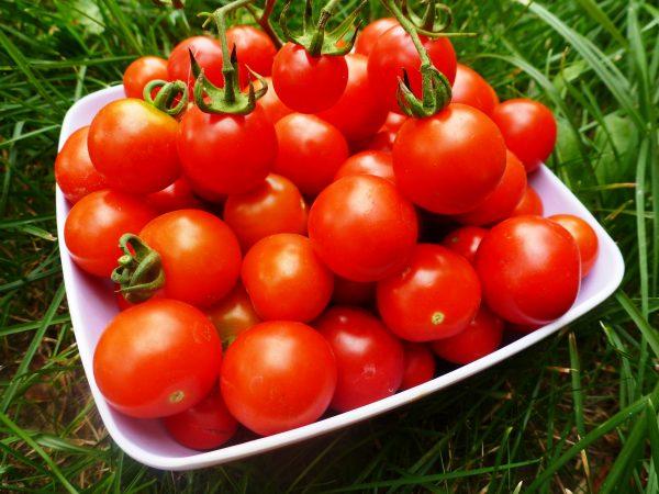 kak-vyrastit-pomidory-v-teplice-zimoj3