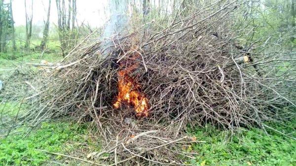 Картинки по запросу сжечь траву на даче