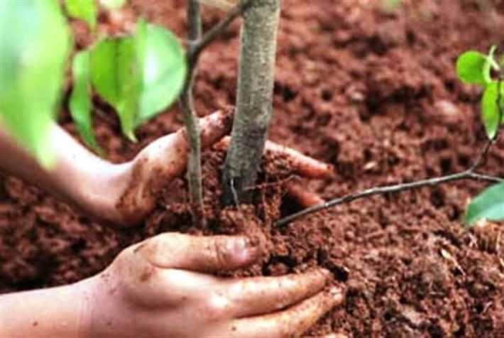 Картинки по запросу Как правильно пересадить дерево Пересадка без кома