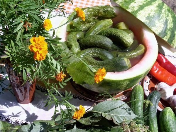 Картинки по запросу Огурцы соленные в арбузе
