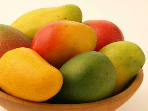 mango-3-1024x768
