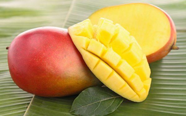 rabstol net fruits 16