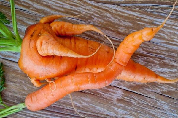 urodlivaya-morkov