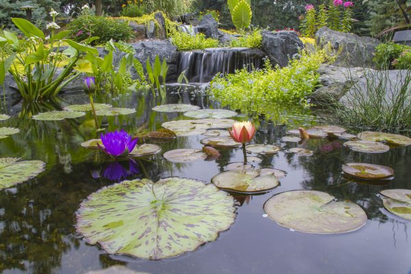 Pond-with-Plants1