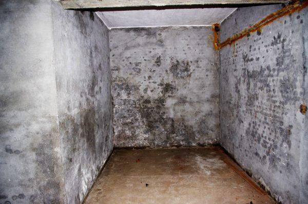 abandoned-cellar-1442516647QKr