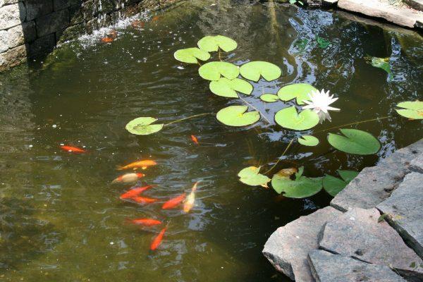 decorative-pond-1