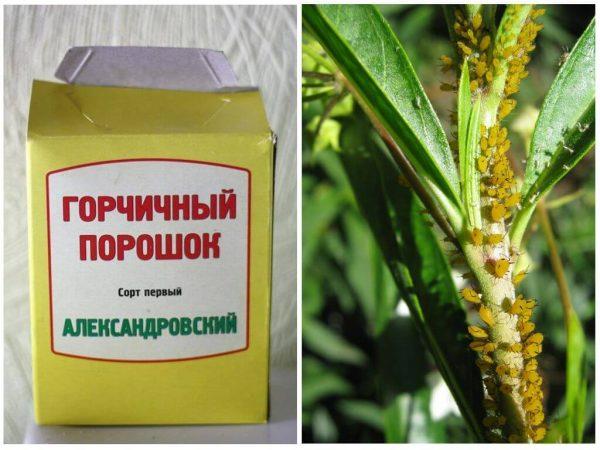 gorchitsa-protiv-tli