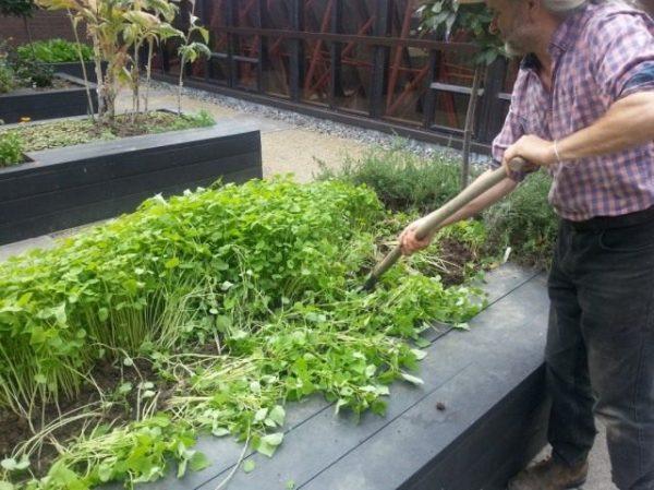 01-Green-manure-640x479