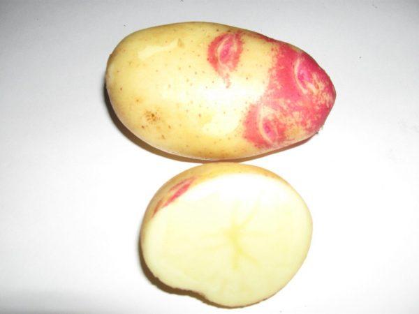 kartofel-pikasso