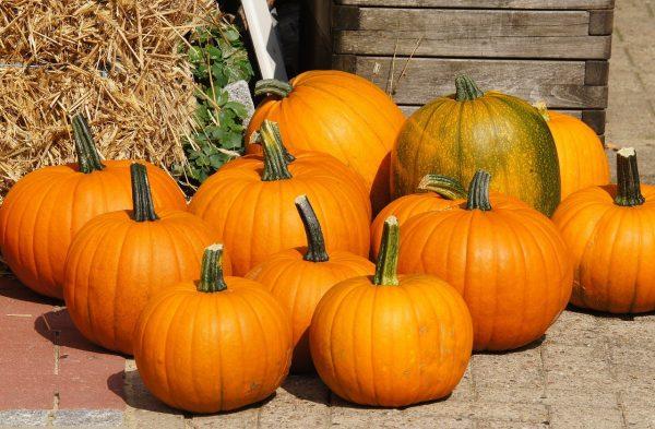 pumpkins-979438 1280-2