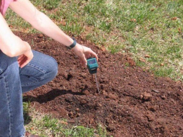 soil-ph-02-640x480