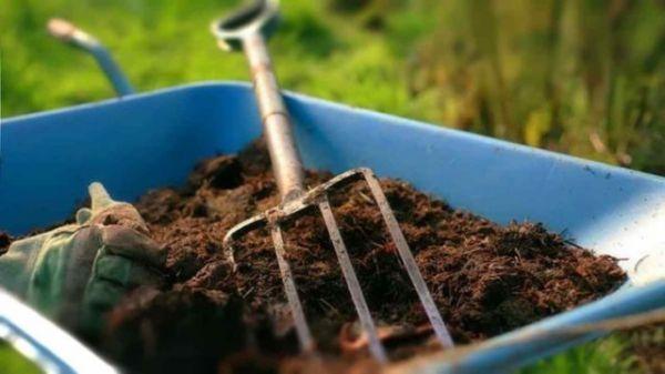 Podkormka-maliny-osenyu-organicheskimi-udobreniyami