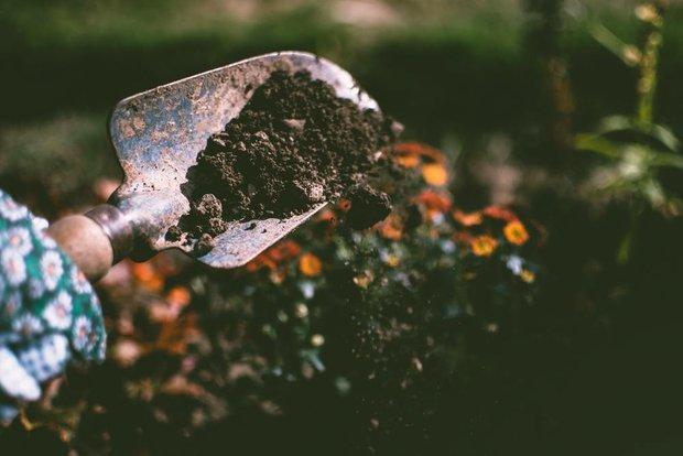 """Картинки по запросу """"Уже пора: какие осенние растения нужно сажать сейчас"""""""""""