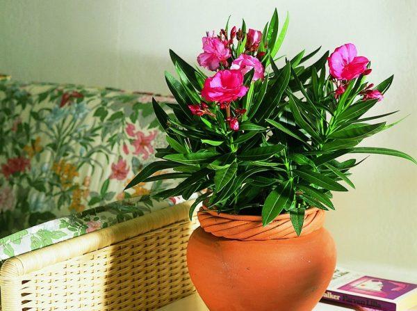 Картинки по запросу комнатные растения фото