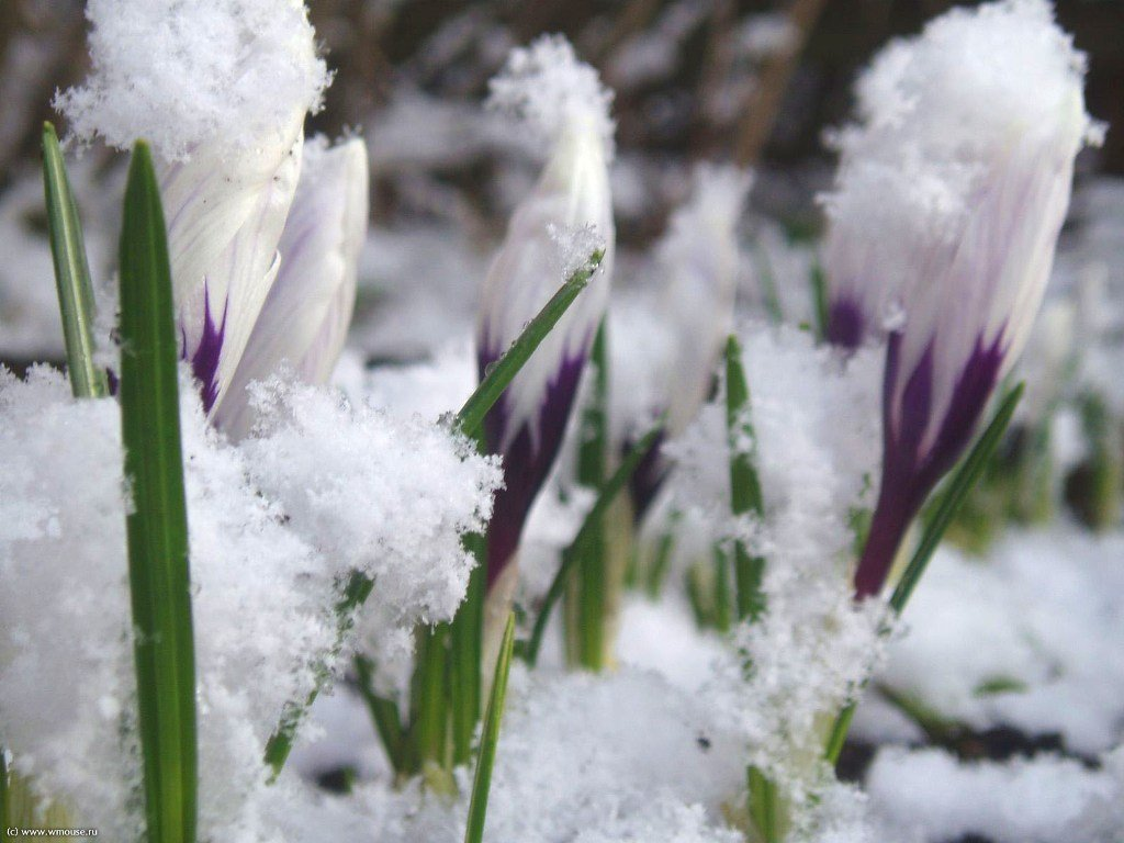 Начало весеннего сезона на огороде. Что можно и нужно делать в марте?