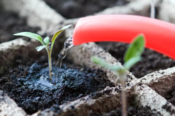 Сезон 2020: 15 самых серьезных ошибок при выращивании рассады