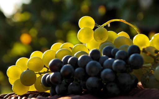 Как правильно ухаживать за виноградом в весенний период: важные рекомендации для садоводов