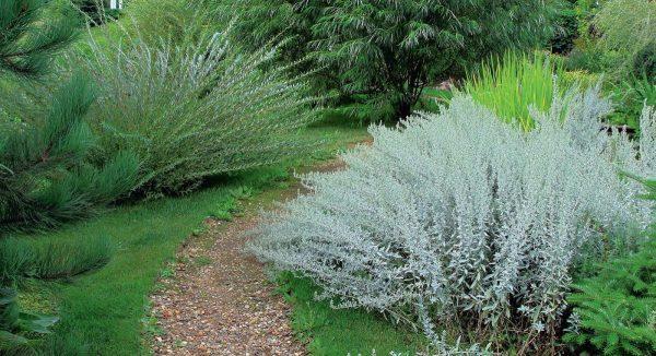 Растительная экономия: как оформить сад без особых затрат ...