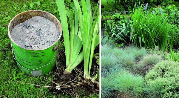 Эффектный и экономный сад: как сэкономить на растениях