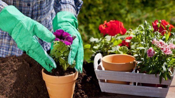 Когда рассаду цветов посадить в мае? 15 цветочных культур для украшения сада