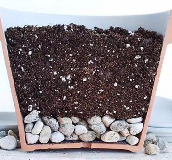 kak-peresadit-kaktus-1 jpg